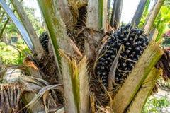 Fotografia plama oleju drzewo Obraz Stock