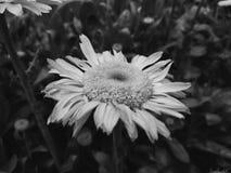 Fotografia preto e branco foto de stock
