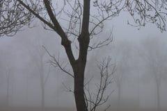 fotografia preto e branco de um dia nevoento imagem de stock