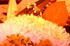 Fotografia rasa do foco da flor amarela imagem de stock royalty free