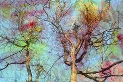 Fotografia retro korony piękni drzewa Obraz Royalty Free
