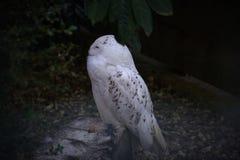 Fotografia sowa w makro- fotografii zdjęcia stock