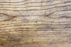 Fotografia stara dębowego drewna tekstura z pazami i dziurami od wo Fotografia Stock