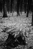 Fotografia stary fiszorek w zielony lasowy czarny i biały Obrazy Royalty Free