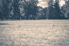 fotografia stary rocznik Parkowa lasowych drzew bagażników halizna Obrazy Royalty Free
