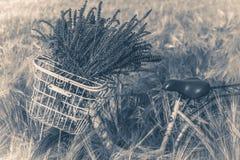 fotografia stary rocznik Rowerowy koszykowy handlebar kwitnie pszenicznego pole zdjęcia royalty free