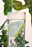 Fotografia szkło woda i cytryna w nim z niektóre zielonymi roślinami, sylwetki fotografia Fotografia Royalty Free