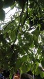 Fotografia verde della natura dell'ombra dell'albero Immagine Stock
