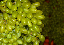 Fotografia verde do fundo das uvas Imagem de Stock
