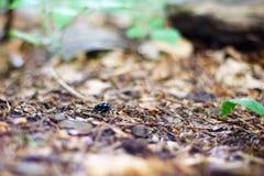 Fotografia z bardzo płytką głębią pole, przedstawia ścigi w lesie z roślinnością Bardzo wielki plamy tło zdjęcie stock