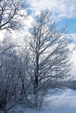 Fotografia zimy drzewo w śniegu Zdjęcia Royalty Free