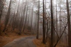 Fotografiado en el bosque en Crimea foto de archivo