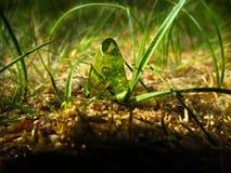 Fotografiando en la gama cercana, la hormiga come los dulces de la jalea Imagenes de archivo