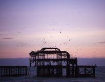 FotografibildBrighton Pier strand på skymningsolnedgången med fåglar som flockas den tagna sydkusten England UK royaltyfri bild