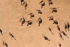 Fotografie aeree dei cammelli nel deserto Fotografia Stock Libera da Diritti