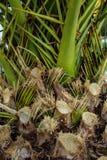 Fotografie der Blätter einer Palme in der untergehenden Sonne stockfotos