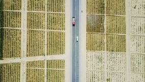 Fotografie der großen Höhe; Rosen-Felder in der Wüste von Xinjiang Stockfoto