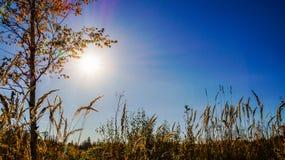 Fotografie der Natur und der Sonne hinter der Stadt im Herbst Stockbild