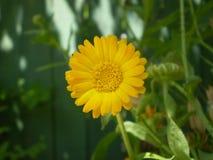 Fotografie der orange Blume auf unscharfem grünem und schwarzem backgrou Stockbild