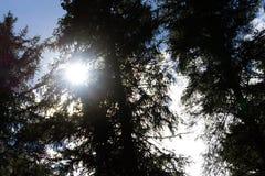 Fotografie der Sonne in den Bäumen Stockfoto