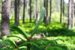 Fotografie des europäischen Waldes mit dem gezierten Zweig im Vordergrund Stockfoto