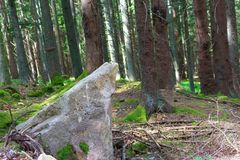 Fotografie des europäischen Waldes mit großem Stein im Vordergrund Lizenzfreies Stockbild