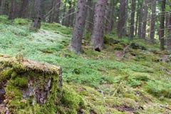 Fotografie des europäischen Waldes mit Stumpf im Vordergrund Stockfotos