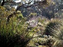 Fotografie des Spinnennetzes in Mallee Lizenzfreie Stockfotos