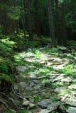 Fotografie des Steinweges im Wald Stockfotografie