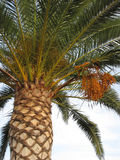 Fotografie die in mediterraan eiland Corsica wordt genomen Stock Foto