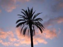Fotografie die in mediterraan eiland Corsica wordt genomen Royalty-vrije Stock Foto's