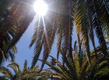 Fotografie die in mediterraan eiland Corsica wordt genomen Stock Fotografie