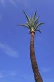 Fotografie die in mediterraan eiland Corsica wordt genomen Stock Afbeeldingen