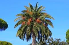 Fotografie die in mediterraan eiland Corsica wordt genomen Royalty-vrije Stock Afbeelding