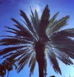 Fotografie die in mediterraan eiland Corsica wordt genomen Royalty-vrije Stock Fotografie