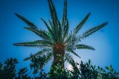 Fotografie die in mediterraan eiland Corsica wordt genomen royalty-vrije stock foto