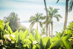 Fotografie die in mediterraan eiland Corsica wordt genomen Mooi struikgewas van bomen en struiken op het strand royalty-vrije stock afbeelding