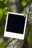 Fotografie op de tak royalty-vrije stock afbeeldingen