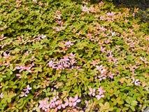 Fotografie van de bloem de oranje stad Royalty-vrije Stock Afbeeldingen