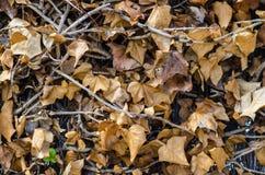 Fotografie von Reben eines Hintergrundes mit braunen Blättern stockfoto