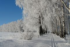 Fotografie zima Styczeń 33c krajobrazu Rosji zima ural temperatury Narciarska droga w lesie zdjęcie stock