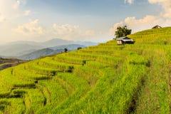 Fotografiert auf Bali Stockbild