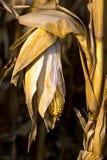 fotografiert auf einem weißen Hintergrund stockbild