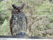 Fotografiet av plast- fejkar Owl Decoy Off Set Arkivfoton