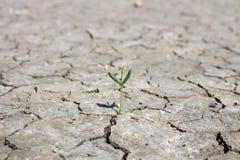 Fotografii życia nowej rośliny susi tereny, pojęcie i pomysły O suszie, Obraz Stock