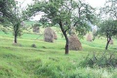 Fotografii haystacks wcześnie spadają na zielenieją pole Fotografia Royalty Free