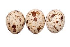 fotografii jajeczna przepiórka Zdjęcie Stock