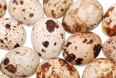 fotografii jajeczna przepiórka Obrazy Stock