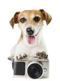 Fotografii kamery pies zdjęcie stock
