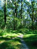Fotografii krajobrazowa lasowa ścieżka w Europejskiej części na Pogodnym letnim dniu Fotografia Royalty Free